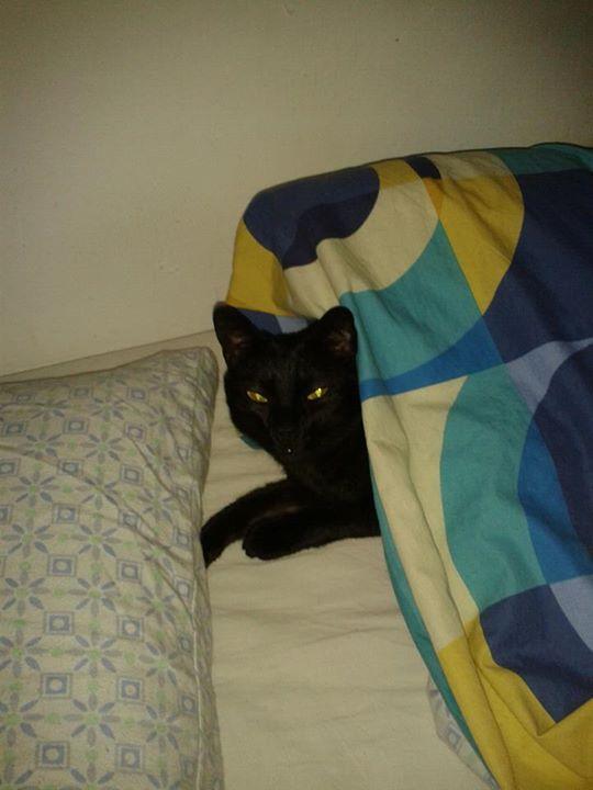 Vicente o un gato en la cama