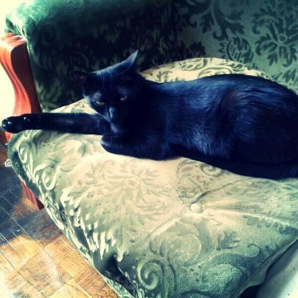 Vicente, el gato psicólogo de Manuel Cabezalí