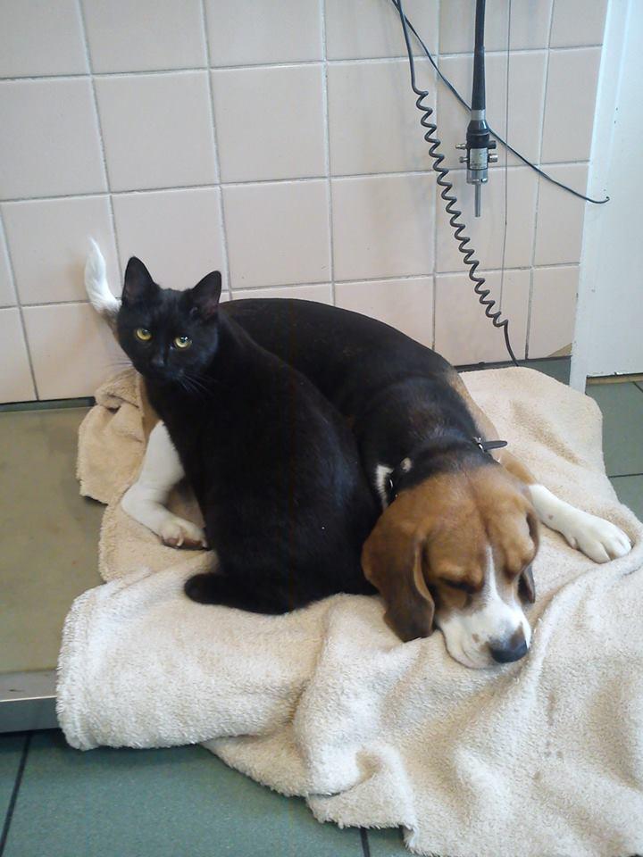 Foto: Refugio de Animales de Bydgoszcz, Polonia.