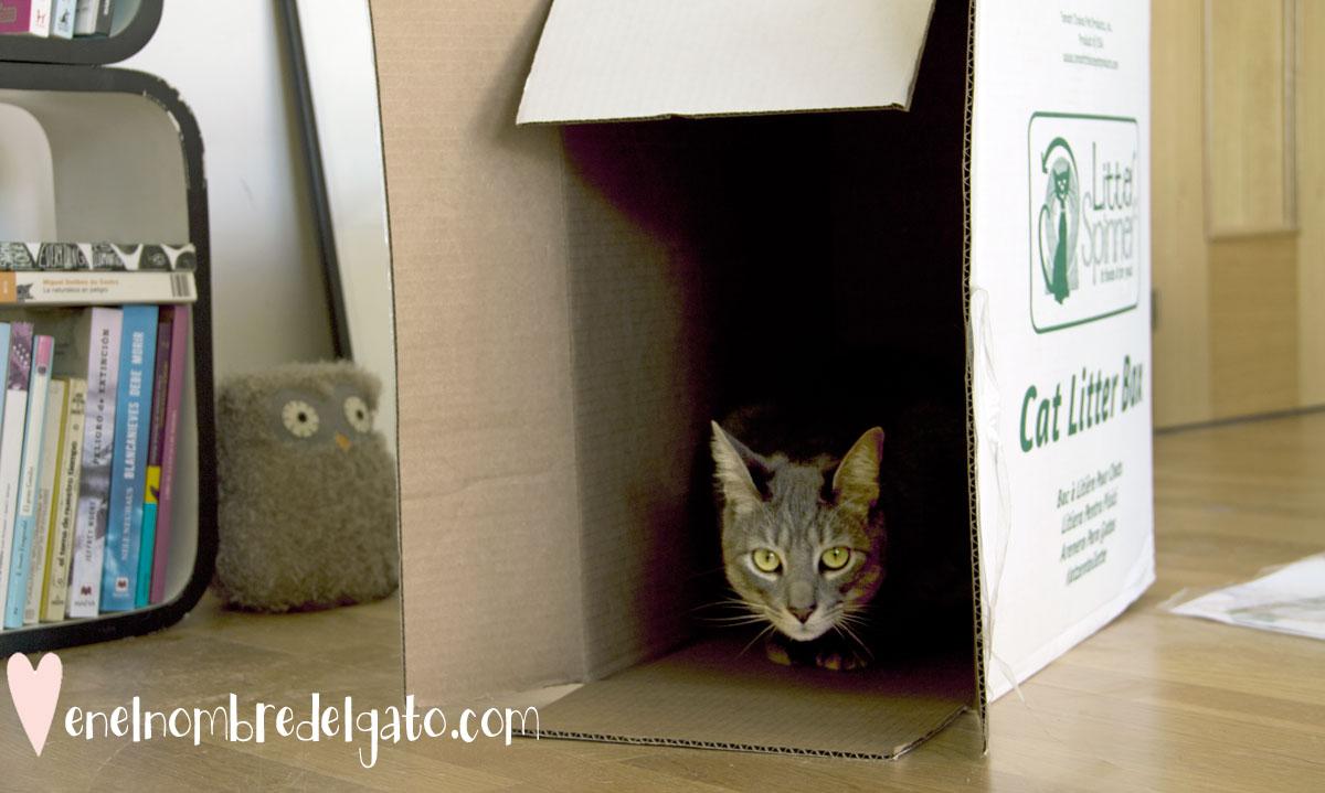 billy-caja