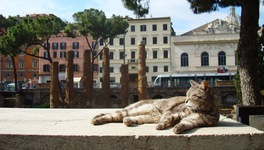 gato en Roma