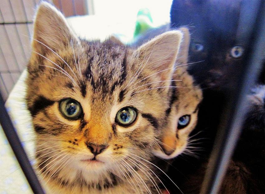 qué ocurre cuando los gatos se estresan