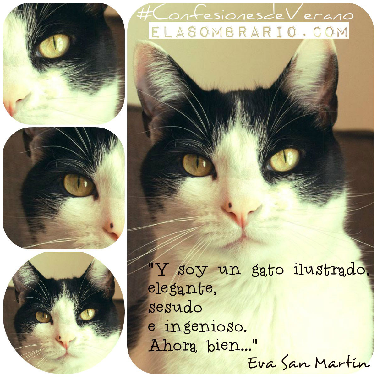 Palabra de Gato, cuento de gatos