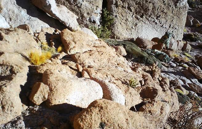 Madre e cachorro de gato andino descansan. / CONAF, Alianza del Gato Andino