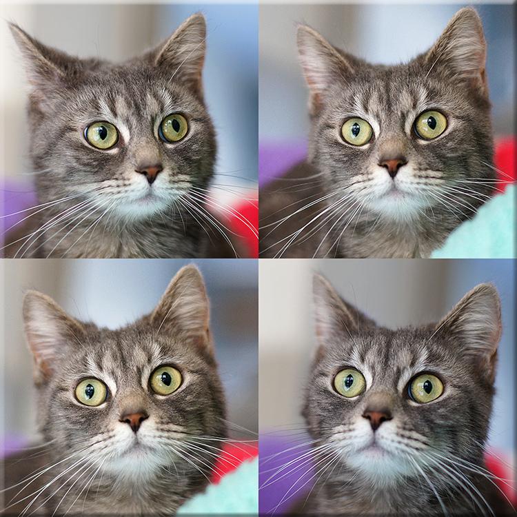 Los gatos hablaron y más de 200 personas escucharon atentas sus problemas de estrés y de desprotección en las Jornadas Felinas Europeas, de Barcelona. ¡ENELNOMBREDELGATO.COM estuvo allí y te lo cuenta todo! / FOTO: hehaden