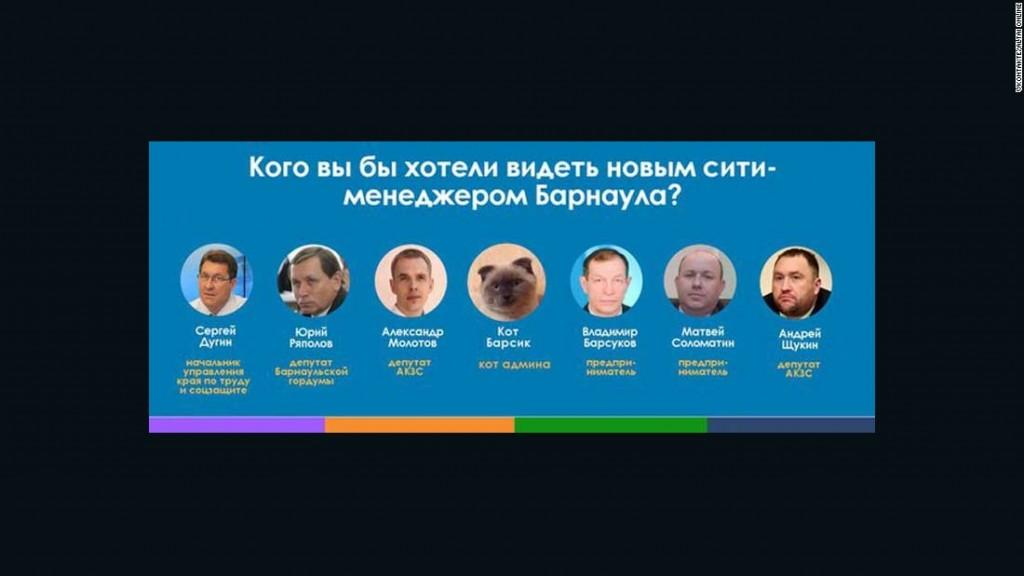 El gato Barsik es el candidato con mayor apoyo ciudano como alcalde en la ciudad de Barnaúl, Siberia.