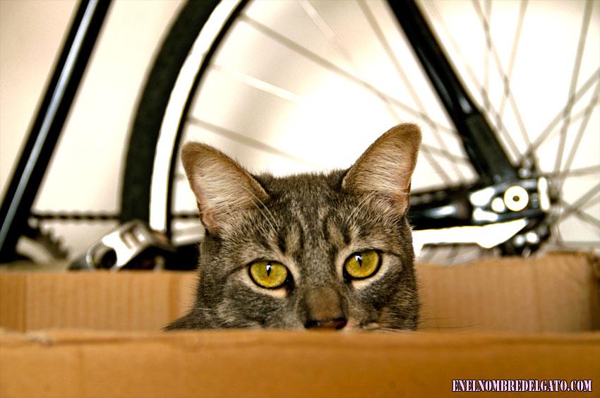 cajas y gatos, una historia de amor eterna