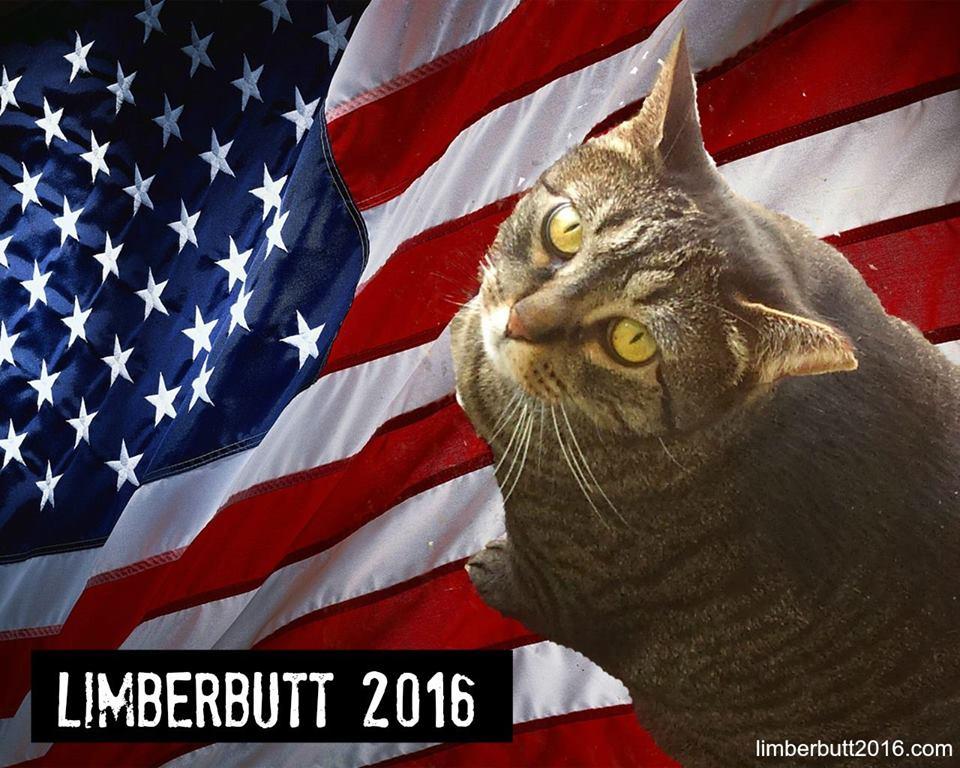 El gato Limberbutt disputa la candidatura demócrata para  presidencia de EE.UU. 2016