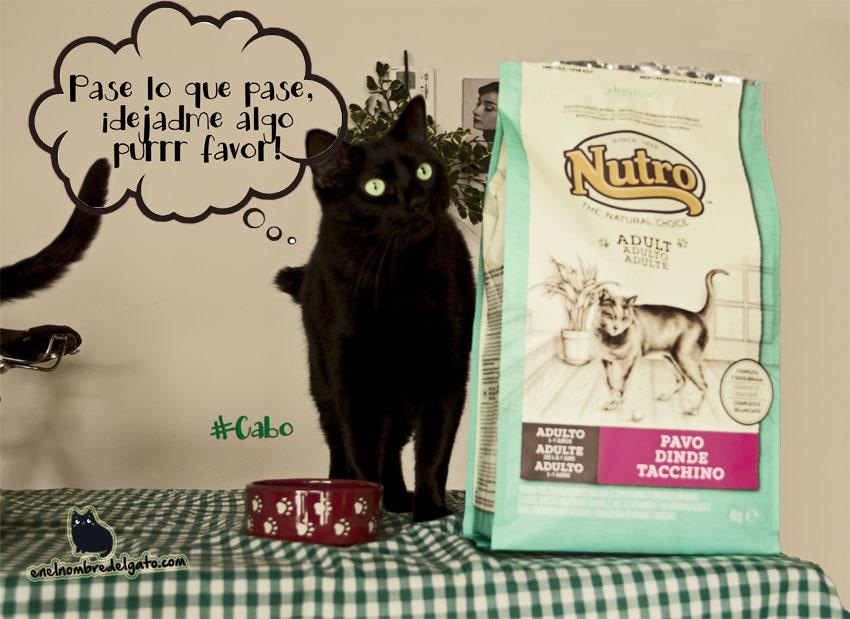 comida gatos regalos