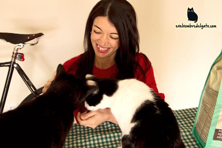comidas gatos concursos
