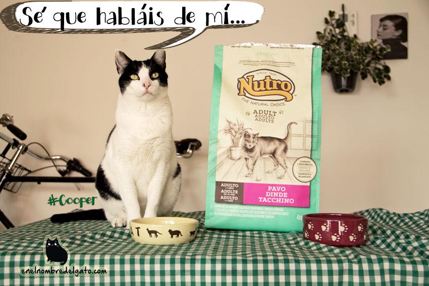 comida gatos concurso