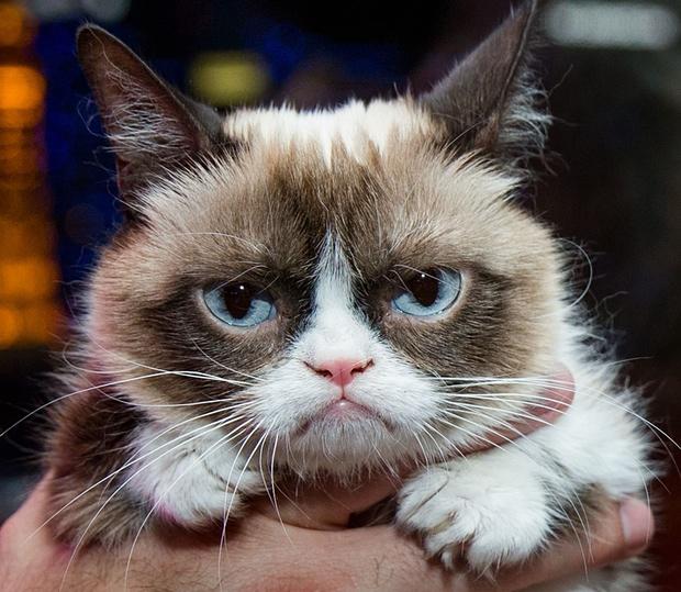 Grumpie cat, una celebrity felina con agente y película propia.