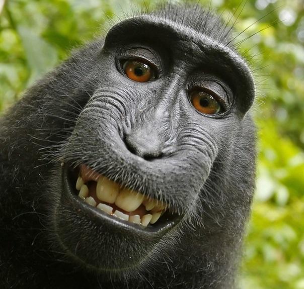 Selfie del mono macaco
