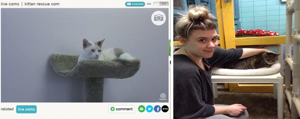 cámaras para gatos sin hogar