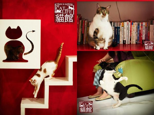 Televisión para adoptar gatos