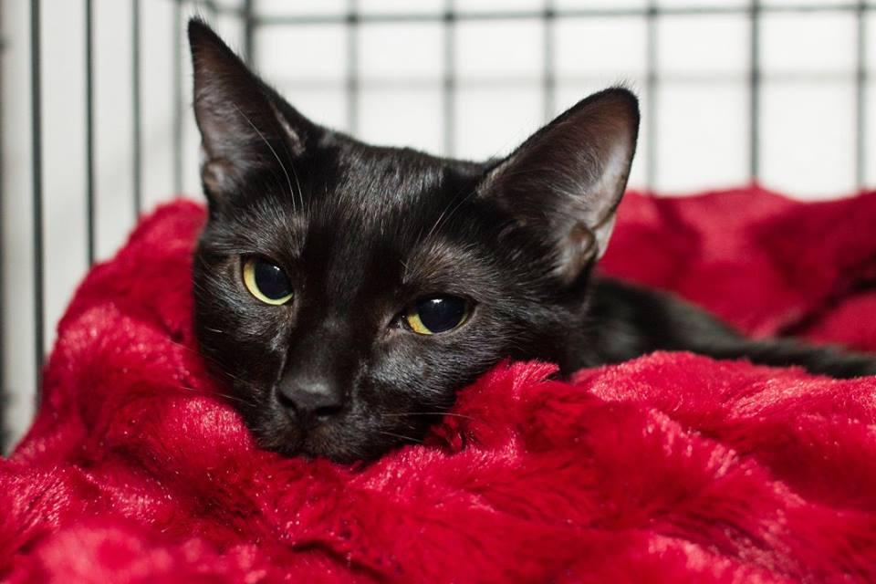 televisión de gatos en adopción