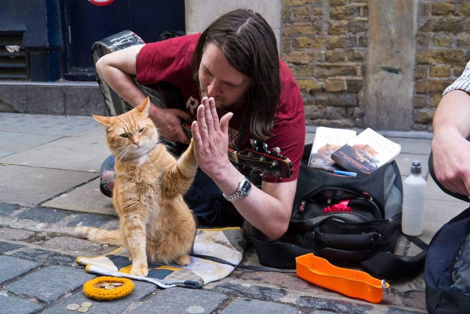 Resultado de imagen de gato callejero