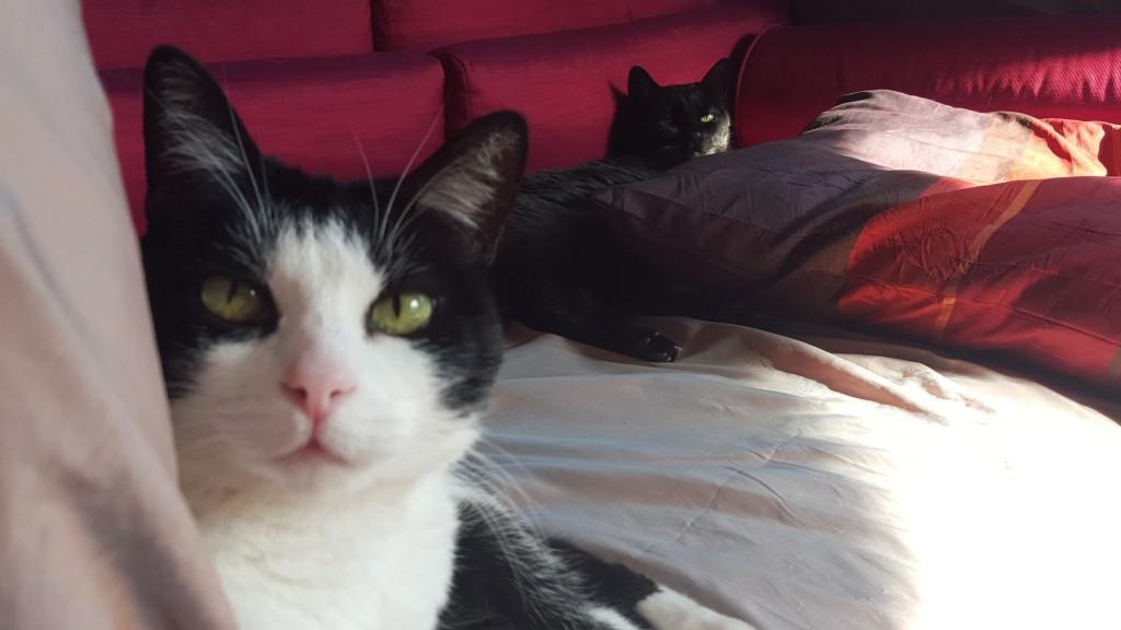 espido-freire-entrevista-gatos-8