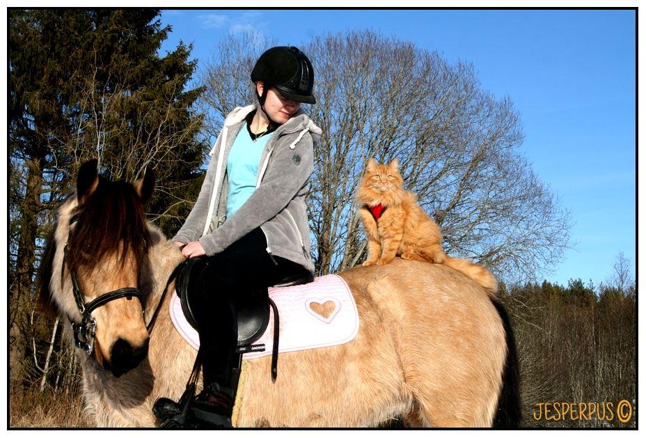 jesperpus-caballo