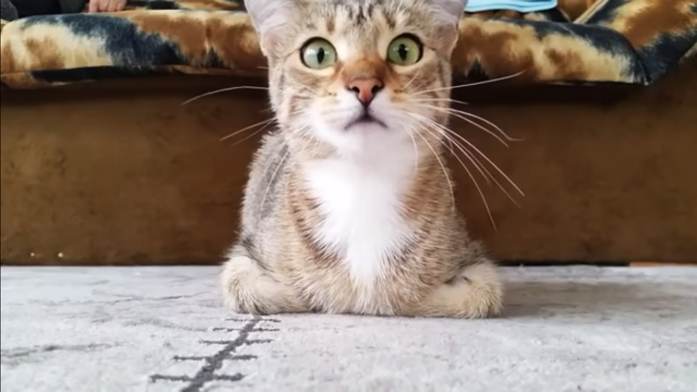 gatos-videos-psicosis