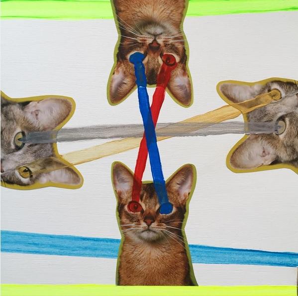 homocats-2
