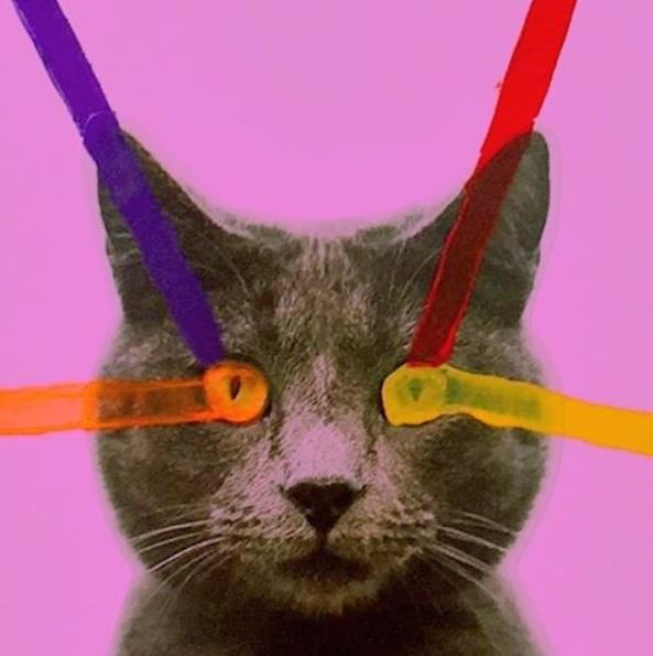 homocats-gatos-gay