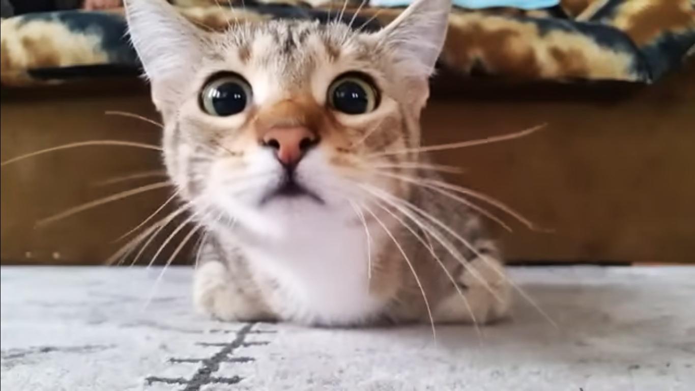 video-gatos-pelicula-miedo