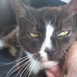 Moon Unit, una gata perdida en Londres y encontrada en París 8 años después