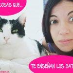 10 cosas que te enseñan los gatos