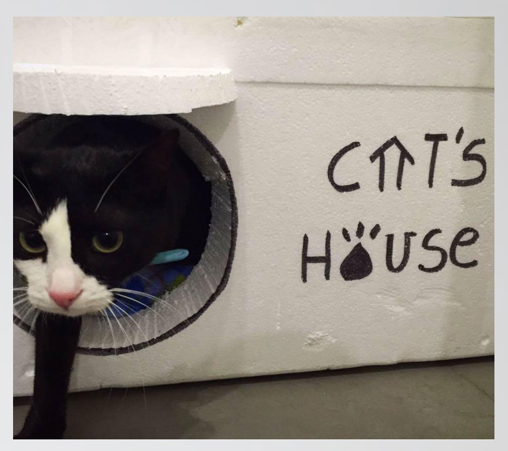 cats-house-casas-gatos-calle-21