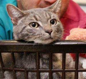 Bobby, el gato que sobrevivió a la lavadora