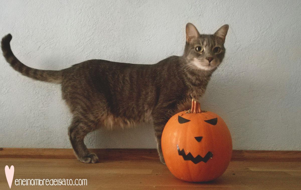 recetas para gatos con calabaza