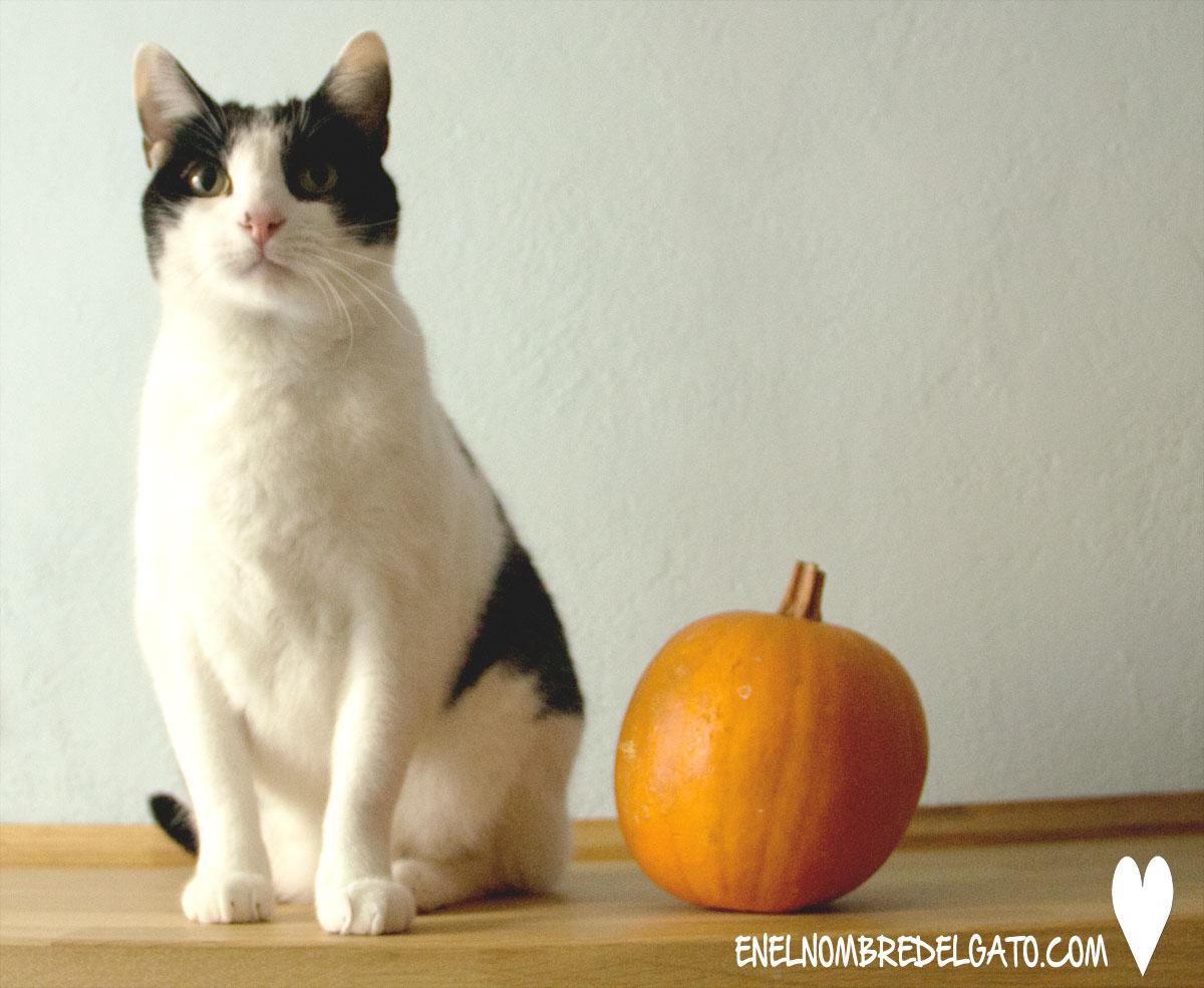gatos-calabaza-beneficios-recetas