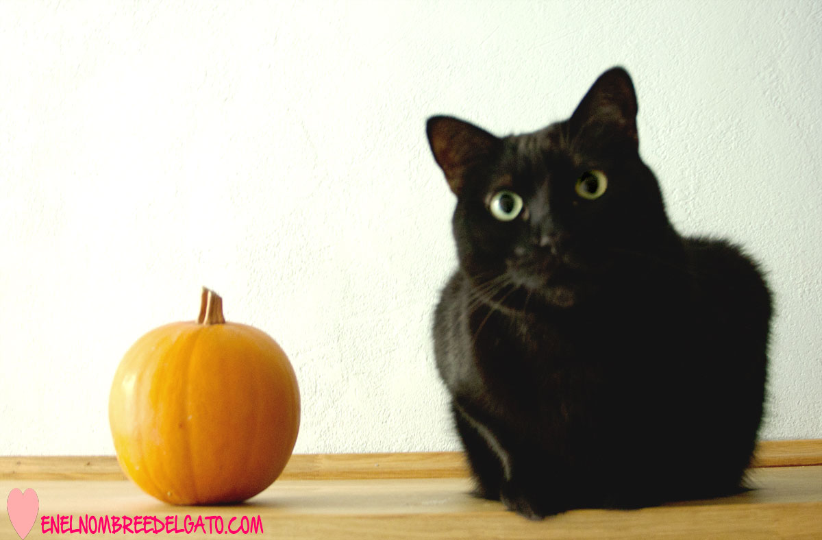 gatos-calabaza-beneficios
