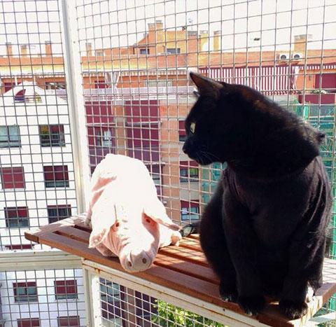 """""""Tomando el sol con mi amigo el cerdito"""". Aiko."""