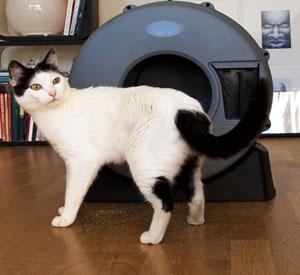 Reseña: arenero giratorio para gatos