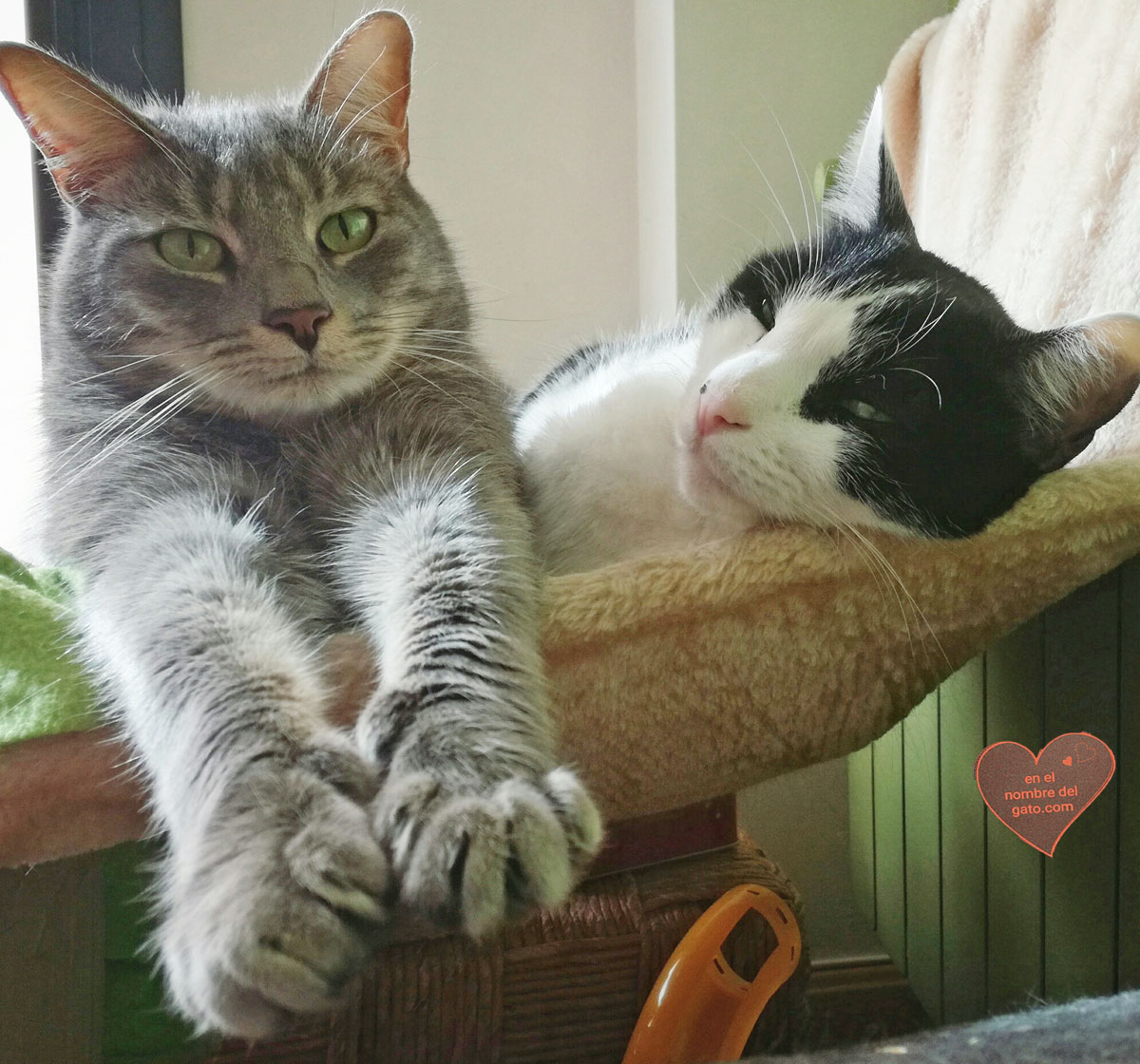 hamacas gatos