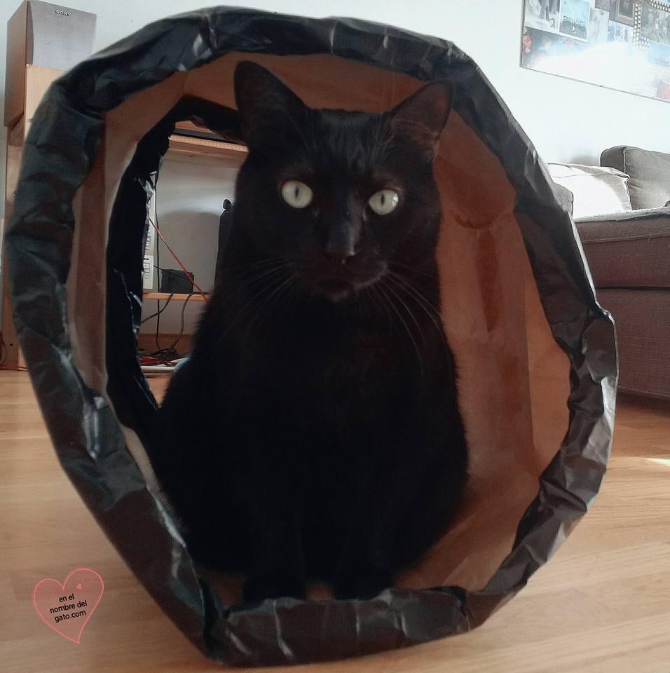 bolsas gatos