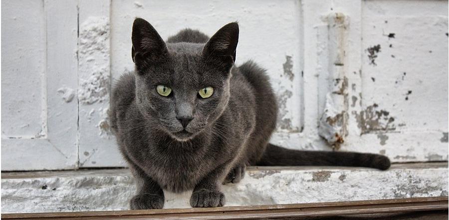 gatos-praia-faro-portugal-2