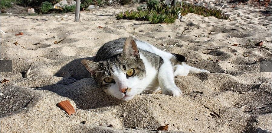 gatos praia faro portugal