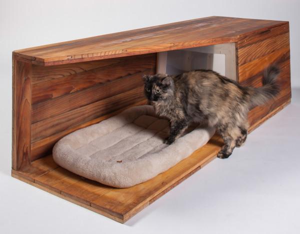 casas gatos calle-arquitectos