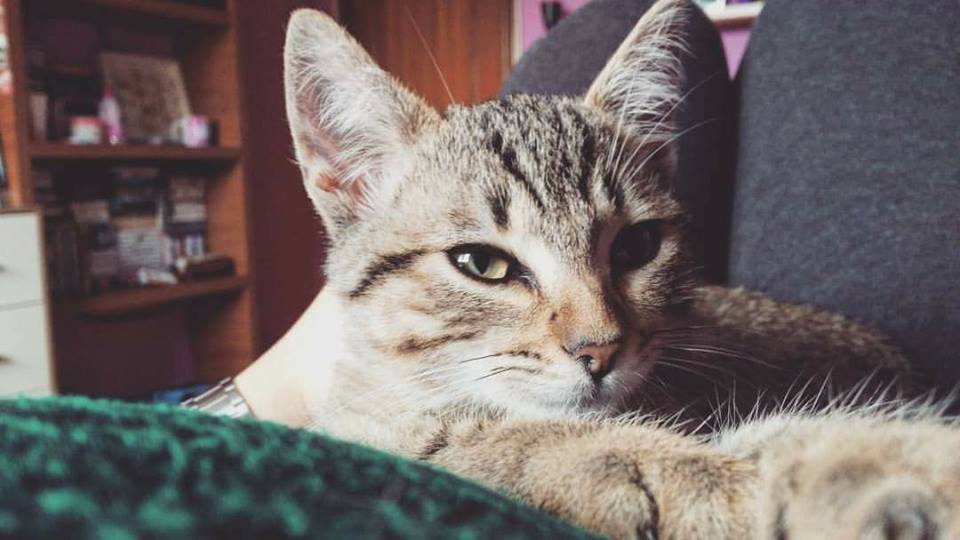 charlie-adoptado-gijon