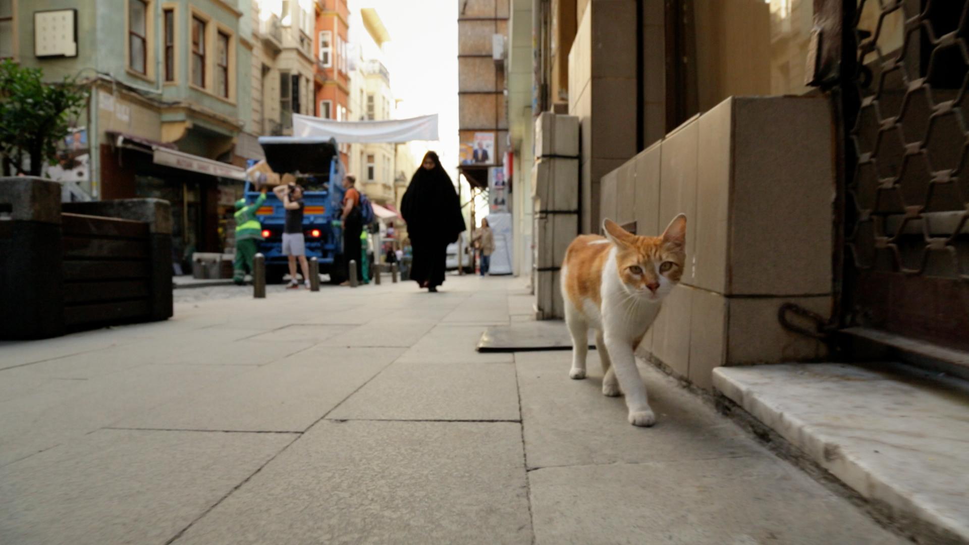 Kedi, película gatos de Estambul