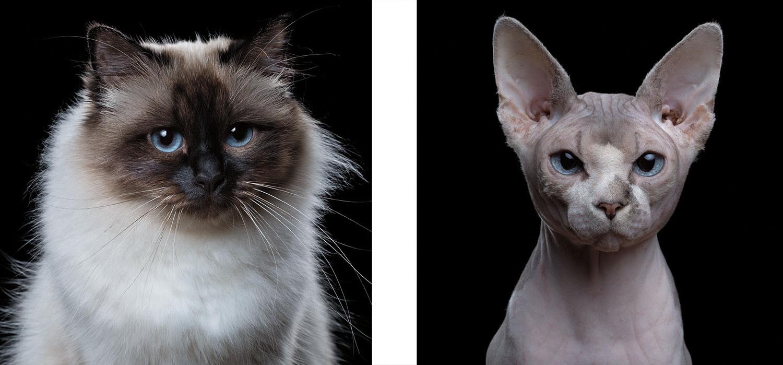 Emociones de los gatos, en fotografías
