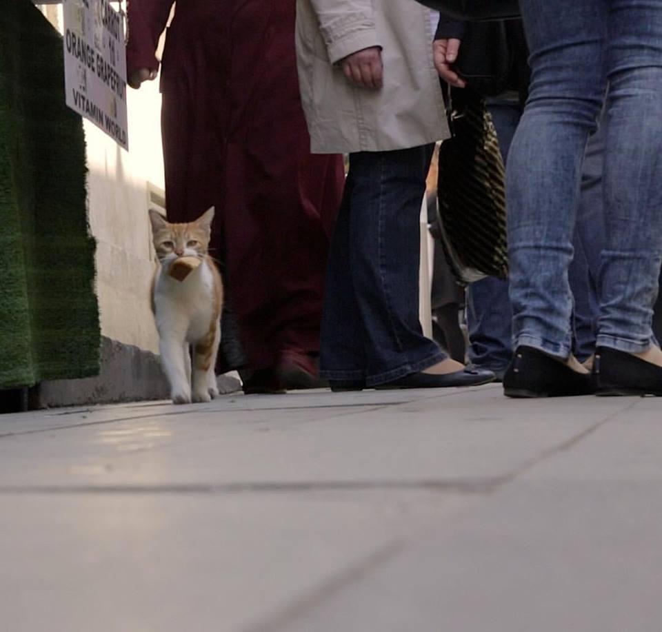 Kedi, película de los gatos de Estambul