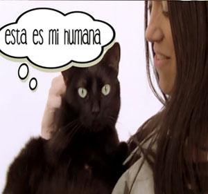 VÍDEO: Un gato Ninja entre humanos