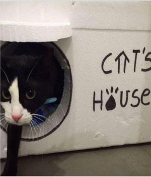 Casas para los gatos de la calle: ¿cómo hacerlas con corcho?