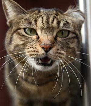 ¿Qué es el CES y cómo protege a los gatos callejeros?