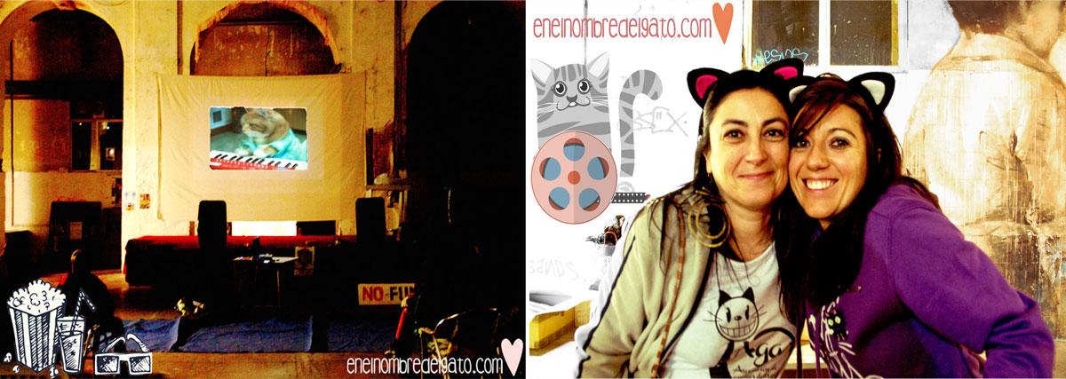 Vídeos de gatos, mucho amor felino