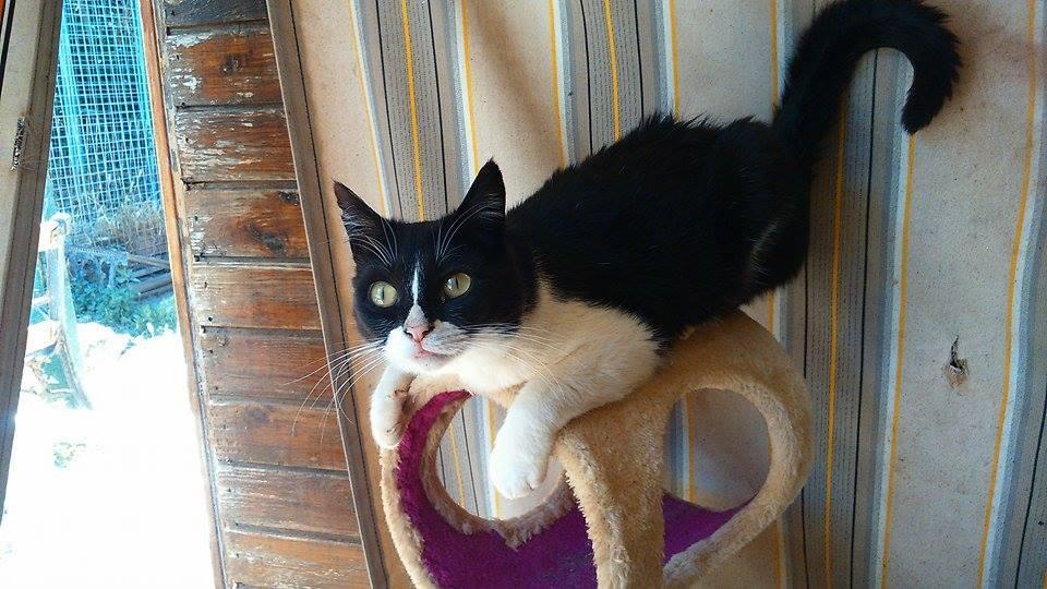 Los gatos de Daya Cervelló necesitan ayuda